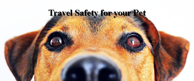 Travel Safety for your Pet