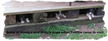 Molly's and Mindy's pups hiding